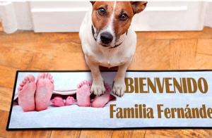 http://oferplan-imagenes.diariosur.es/sized/images/perro_1476972042-300x196.png
