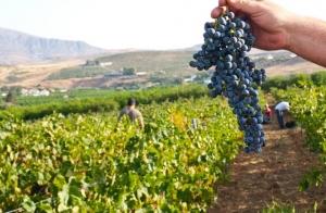 http://oferplan-imagenes.diariosur.es/sized/images/visita,_cata,_aperitivo_y_vino_perez_hidalgo3-300x196.jpg